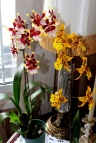 Moje orhideje